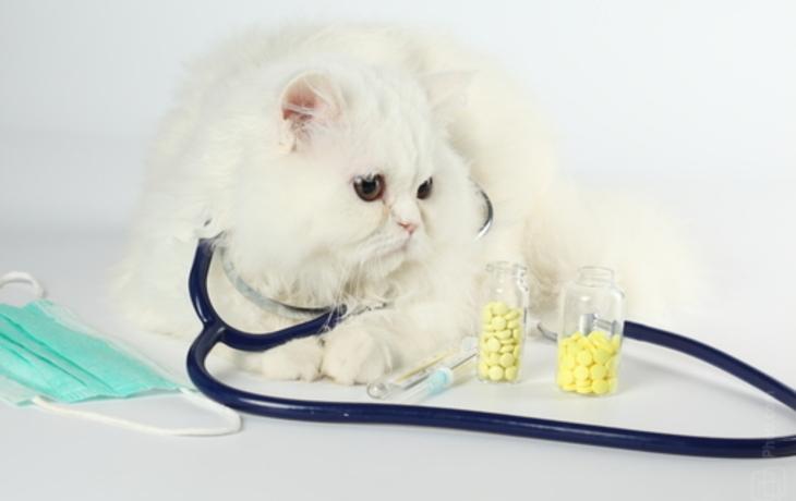 не болейте картинки с кошками очень приятное