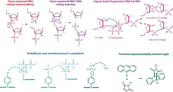 Deoksyrybozymy Katalityczne Dna Artykuly Biotechnologia Pl